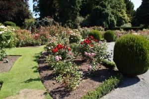 Lovely roses in the botanic gardens.