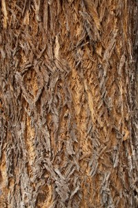 Braided bark